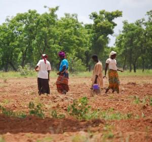Kpachelo, Ghana women farmers sow groundnut