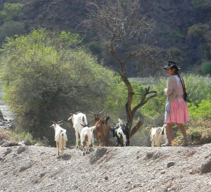 girl & goats in kacha kacha