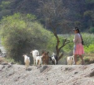 girl & goats in kacha kacha