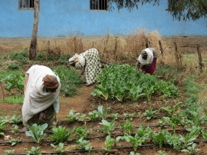 SHG Mothers at local school garden