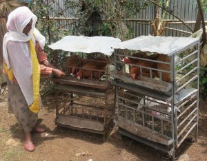 Sululta SHG Beneficiary with own livestock.25