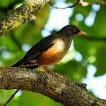 bird in addis