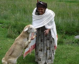 Shibire Damena and her goat