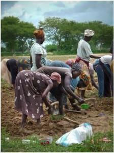 women farming