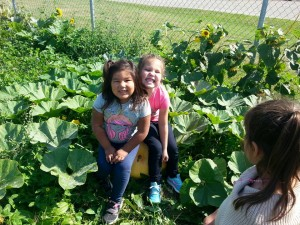 School gardens in New Brunswick bring nutrition knowledge to kids through hands-on learning.