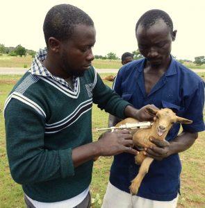 Vaccinating goats: Veterinarian Mustala Sakara with Peter Boare