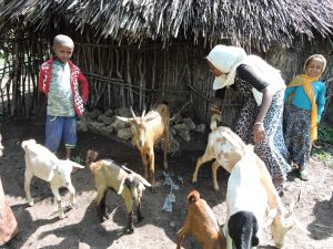 Fatima tends to their herd of goats with the help of her children